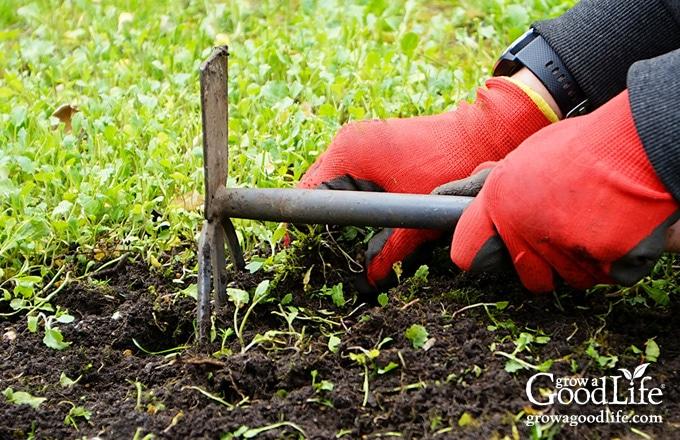 red gloved hands weeding the garden using a garden claw