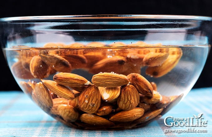 almonds in a bowl of water