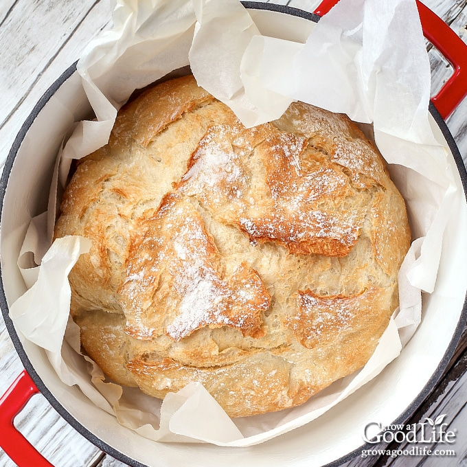 baked no knead bread in a red dutch oven on a table