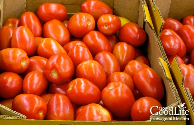 two crates of roma tomatoes