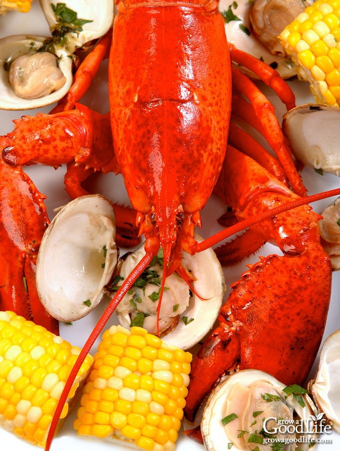 pile of cooked lobsters, clams, corn, and potatoes on a table