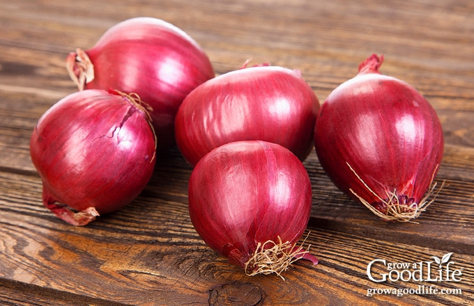 whole red onions on a table