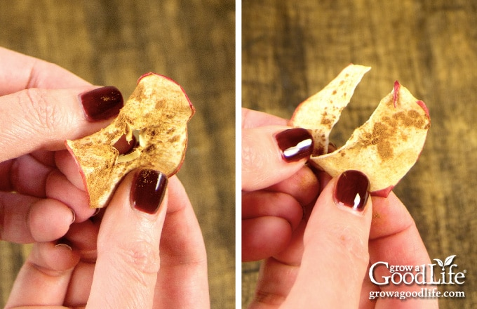 folding apple chips to test for crispness