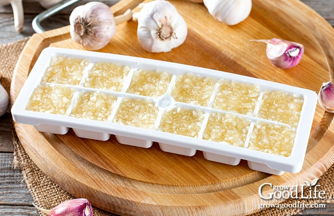 pureed garlic and oil in ice cube trays ready for the freezer